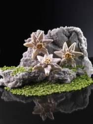 Edelweiss mold